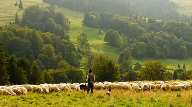 Manfaat Biologi Bidang peternakan
