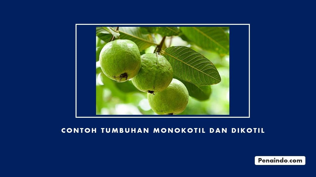 Contoh Tumbuhan Monokotil dan Dikotil